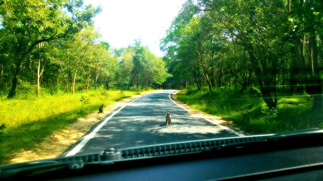 w1 - greeted by curious monkeys.jpg