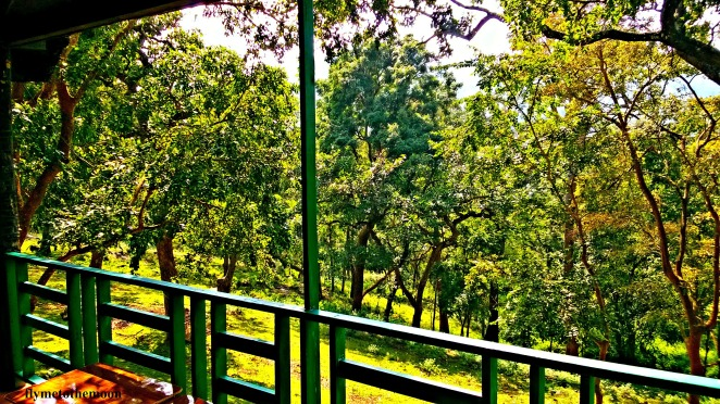 w1 - view from our balcony.jpg